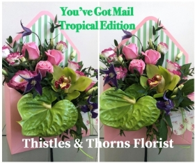 You've got mail   Tropical Edition